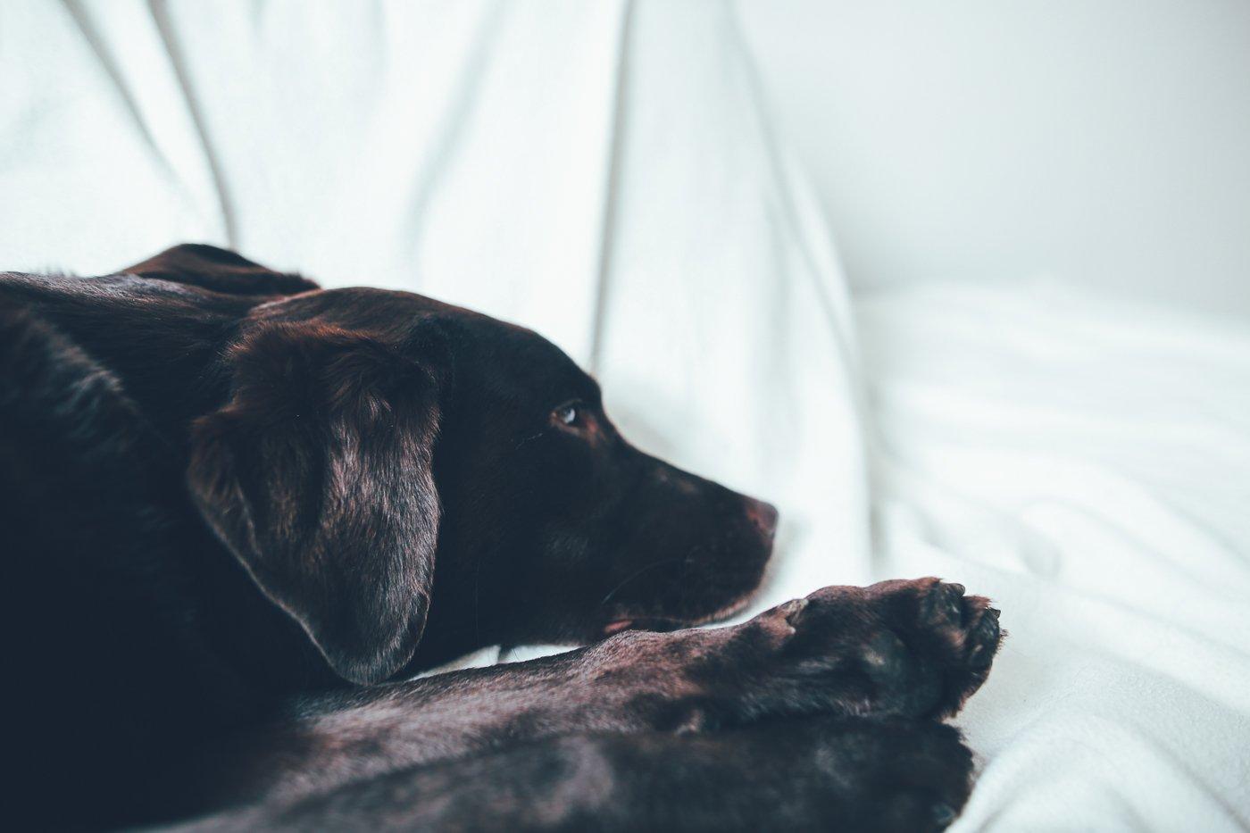 hundeeltern f r ein wochenende ein hundetagebuch. Black Bedroom Furniture Sets. Home Design Ideas
