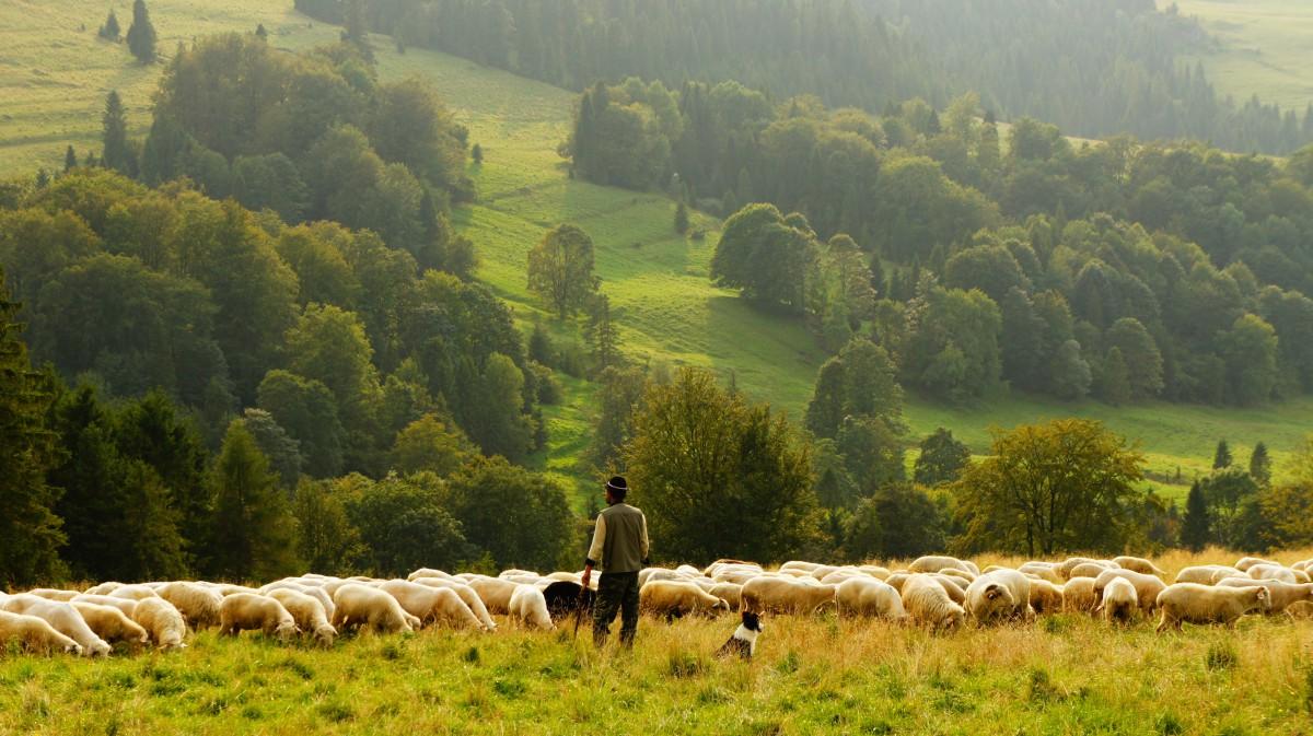 Jahr des Schafes Südtirol